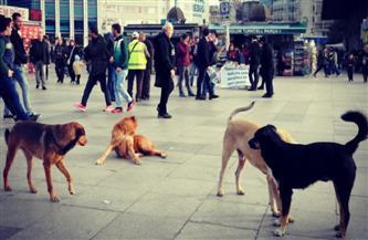 كلاب إسطنبول الضالة تلعب دور البطولة في فيلم وثائقي جديد