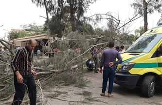 مصرع شاب سقطت عليه شجرة بالدقهلية | صور