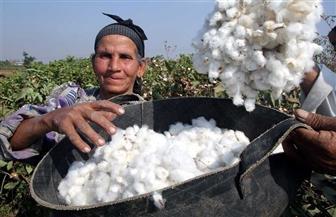 وكيل زراعة دمياط: حلول فورية لمشكلات مزارعي القطن