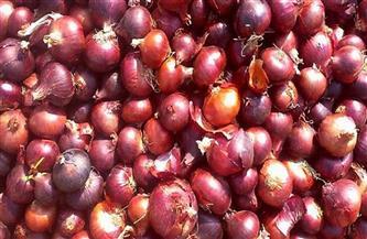 """""""الزراعة"""" تصدر نشرة بالتوصيات الفنية لمزارعي محصول البصل"""