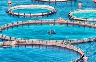 الزراعة: مصر تحتل المرتبة الأولي إفريقيا في الاستزراع السمكي