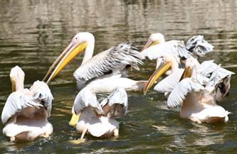 حديقة الحيوان تحتفل بعيدها الـ130 بالتزامن مع اليوم العالمى للحياة البرية  صور