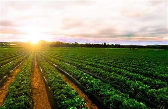 """ارتفاع محفظة تمويل """"الأهلي"""" للمشروعات الزراعية بنسبة 33%"""