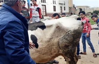 قافلة بيطرية مجانية بقرية الرحامنة بدمياط | صور
