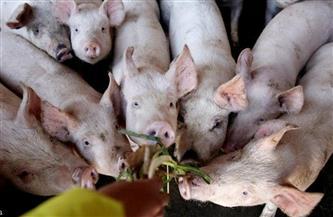 الصين تؤكد تفشي حمى الخنازير الإفريقية في إقليمي سيشوان وخبي
