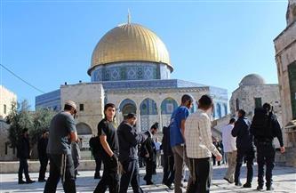 مستوطنون يقتحمون المسجد الأقصى المبارك من جهة باب المغاربة