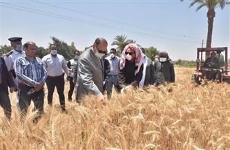 محافظ أسيوط: زراعة 233 ألف فدان قمح.. والانتهاء من تجهيز 28 شونة ومركز تجميع وصومعة  صور