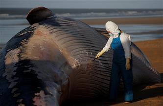 الأمواج تجرف حوتين نافقين إلى شاطئ في بنجلاديش