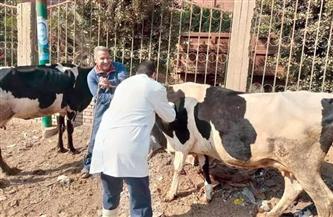 """محافظ الفيوم تحصين 100 ألف رأس ماشية ضد """"الجلد العقدي"""" و""""جدري الأغنام"""" بالفيوم"""