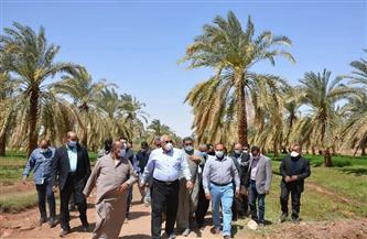 محافظ الوادي الجديد يتفقد مشروعات زراعية بقرية بدخلو | صور