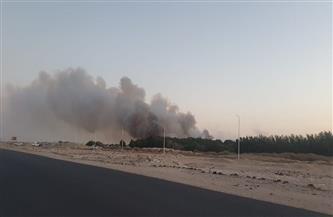 الدفع بعدد من سيارات الإطفاء للسيطرة على حريق الغابة الشجرية بالغردقة | صور