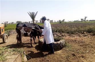 الزراعة: تحصين أكثر من مليون رأس ضد مرض الجلد العقدي وجدري الأغنام | صور
