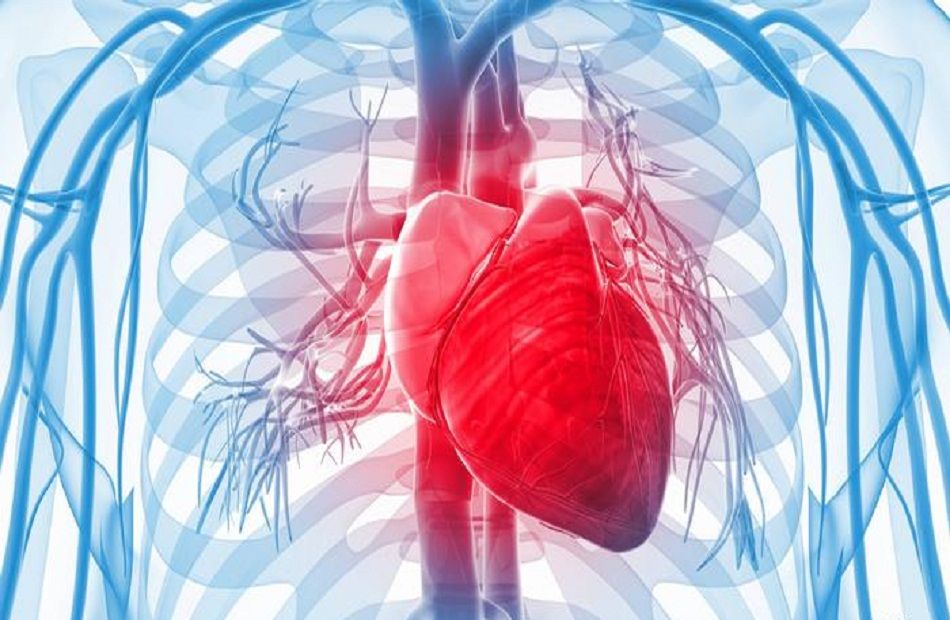 يحمي قلبك ويقي أمراض عديدة.. 19_2021-637541214716