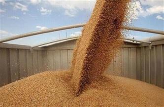صوامع وشون سوهاج تبدأ اليوم في استلام محصول القمح من المزارعين