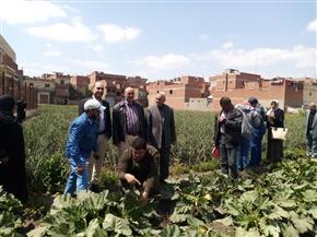 وقاية النباتات ينفذ مدارس حقلية للمزارعين بمحافظة الدقهلية| صور