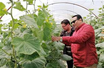 وكيل وزارة الزراعة بدمياط يتفقد صوب إنتاج الخيار بنطاق المحافظة
