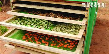 كيف تبدأ مشروعا لتجفيف الفاكهة والخضراوات بالطاقة الشمسية؟
