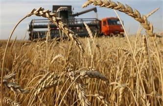الانتهاء من حصاد 232 ألف فدان قمح بالأراضي الزراعية بمحافظة كفرالشيخ