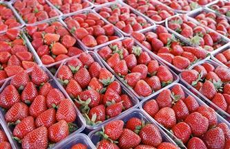 تصدير خضراوات وحاصلات زراعية وفواكه إلى 9 دول عربية وأوروبية عبر ميناء دمياط