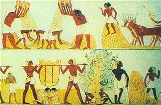 """وللبقوليات تاريخ يروى عند الفراعنة.. """"زكائب الفول"""" قرابين لأمون رع والعدس غذاء بناة الأهرام"""