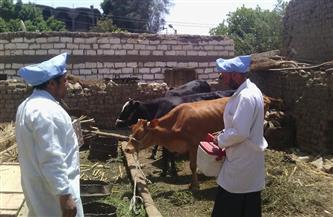 الزراعة تطلق حملة قومية للتحصين ضد مرضى الجلد العقدي وجدري الأغنام.. غدًا