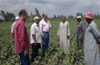 الإرشاد الزراعى.. نافذة مصر العلمية لزيادة الإنتاجية الزراعية