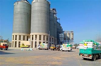 إقبال على توريد القمح المحلي في ثالث أيام التوريد للشون والمطاحن بكفرالشيخ |صور