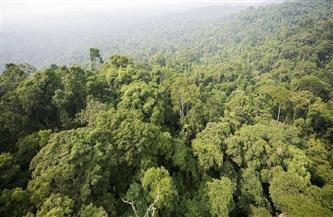 البرازيل تعتزم إنهاء إزالة الغابات غير القانونية بحلول 2030