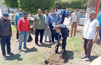 زراعة ألف شجرة زيتون بالحدائق العامة المجانية بمدن كفر الشيخ |صور