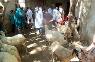تحصين 179 ألف رأس ماشية ضد مرض الجلد العقدي وجدري الأغنام بالمنوفية | صور