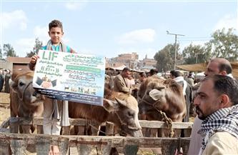 إنشاء قطاعات مركزية لصندوق التأمين على الثروة الحيوانية بالدلتا والقناة وصعيد مصر للتواصل مع المربيين |صور