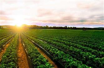 """وزير الزراعة: """"الدلتا الجديدة"""" أضخم مشروع استصلاح في المنطقة"""