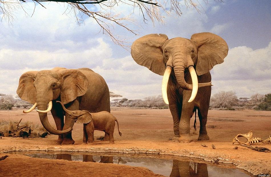 ناميبيا تبيع  فيلا من الفيلة المئة والسبعين المطروحة في مزاد
