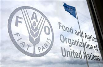 """منظمة """"فاو"""": أسعار الغذاء ترتفع لأعلى مستوى منذ منتصف 2014"""