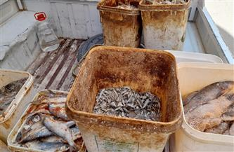 ضبط 165 كيلو أسماك مملحة فاسدة بالأقصر | صور