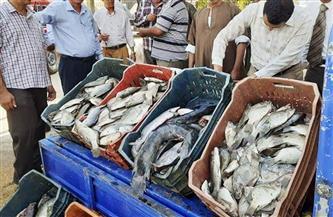 ضبط 3 أطنان و500 كيلو أسماك غير صالحة للاستهلاك في الغربية