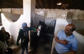 بالخيول.. الغردقة تحتفل باليوم العالمي للتوحد