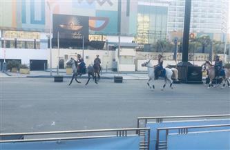 قبيل نقل المومياوات الملكية.. بروفات تجريبية بالخيول بمتحف التحرير | صور
