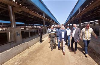 الغضبان: محطة تسمين الماشية ببورسعيد حققت الاكتفاء الذاتي من إنتاج اللحوم الحمراء   صور