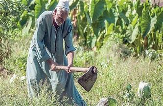 «زراعة الإسكندرية» تستعد لإطلاق منظومة «كارت الفلاح الذكي» لخدمة 30 ألف مزارع