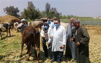 بيطري الدقهلية: لم تظهر حالات إصابة بالجدري أو العقدي.. وتحصين آلاف الأبقار