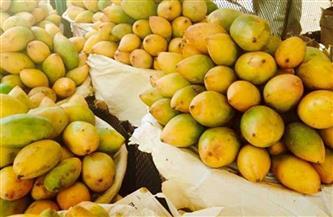"""""""الزراعة"""" تصدر نشرة بالتوصيات الفنية لمزارعي محصول المانجو يجب مراعاتها خلال شهر أبريل"""