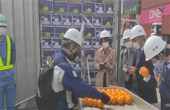 وصول أول شحنة برتقال مصري للسوق الياباني بعد رفع الحظر عن الحاصلات الزراعية
