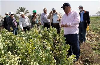 معهد المحاصيل الحقلية ينظم ورشة عمل القمح في محطة بحوث الجميزة بالغربية | صور