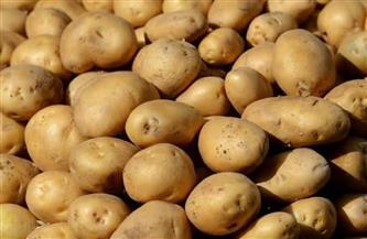"""""""الزراعة"""": صادرات مصر من البطاطس تتجاوز الـ380 ألف طن هذا العام وروسيا أكبر مستورد"""