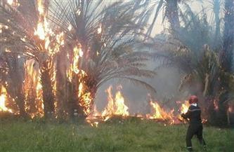 النيابة تحقق في واقعة نشوب حريق بأرض زراعية جنوب سوهاج