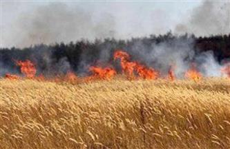 السيطرة على حريق بمحصول قمح في سوهاج