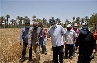 «زراعة أسيوط»: 233 ألفًا و171 فدانًا مزروعة بالقمح هذا العام | صور