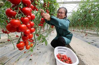 دخل الفلاحين الصينيين في ازدياد مستمر