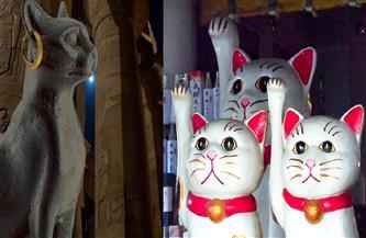 أساطير «باستيت» و«إينيكو».. «بوابة الأهرام» تصحبك في رحلة لاكتشاف أسرار القطط في مصر واليابان قديمًا